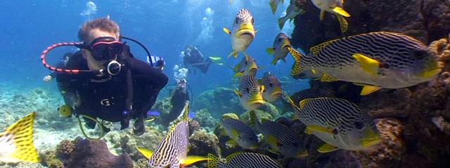 diving_lizard_island2